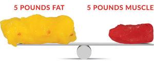 fat vs muscle scale